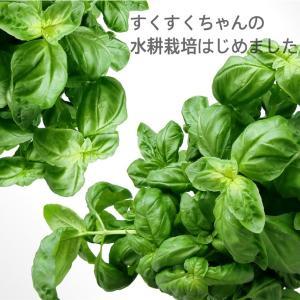 #1 すくすくちゃんと水耕栽培【Green Farm】