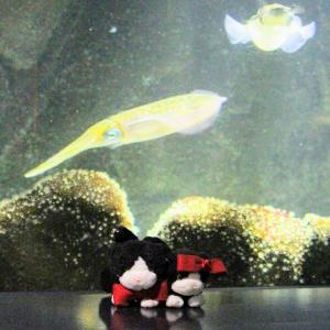 ニャンズ東北旅❤25 日本海・加茂水族館4 アシカさんにゃ♥