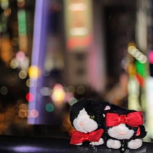 渋谷~表参道 歩き・クリスマス キラキラニャ♥2