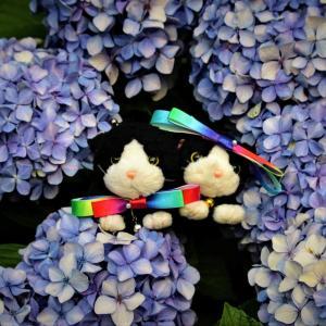 アジサイ紫陽花