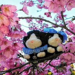 花々とニャンズ 2020 春・桜編ですニャ