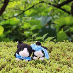 #上野動物園 キリンの赤ちゃんにゃ 可愛いにゃ