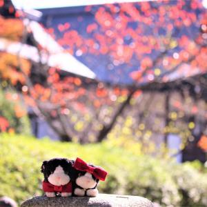 嵐電に乗って~京都 太秦広隆寺ですにゃ