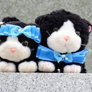 パンダ赤ちゃん双子誕生ですにゃ