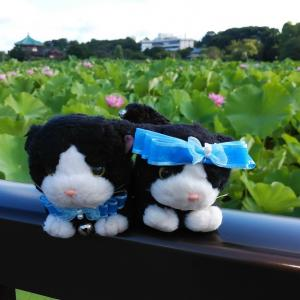 otori♡(オトリ)とニャンズ・・は リアル引っ越しの・