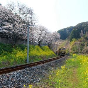 JR九州 長崎本線・旧線 キロシ47形 SWEET TRAIN『或る列車』 大草~東園