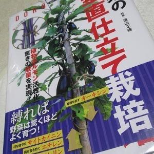 野菜の垂直仕立て栽培
