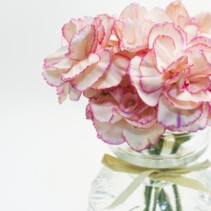 花のサブスク|お花の定期便ブルーミーライフ|評判や口コミ、解約ページの場所