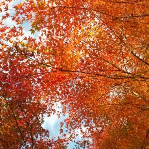 三郎丸の滝 紅葉が見頃