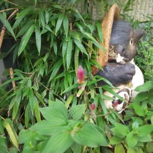 杜鵑草と夏バテ