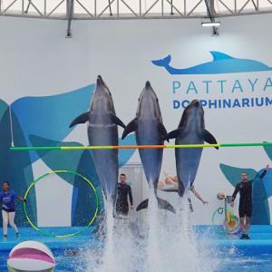 娘と行ってきた!タイ・パタヤの子連れ向けにおすすめの水族館3選。