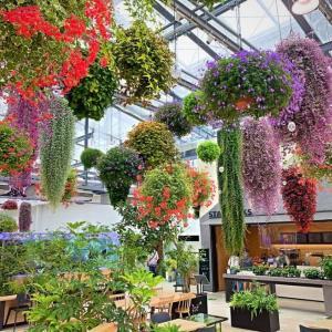最新植物園HANA BIYORI (はなびより)にお出かけ