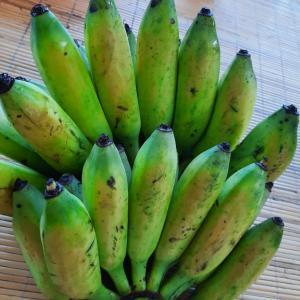 2020年6月5日(金) 熟れてない青いバナナを黄色くする方法