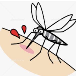 2020年6月12日(金) 蚊に刺されたら