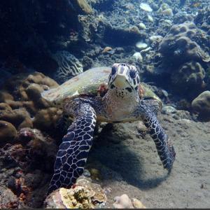 インドネシア語のクラクラとプニューの違い知ってますか?@バリ島ダイビング アメッド