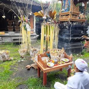 バリ島の儀式 : ムチャル@アメッド