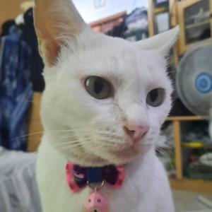 猫のお尻が。。。@バリ島アメッド