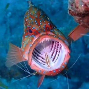 水中クリーニングステーションで面白いお魚模様@バリ島アメッド