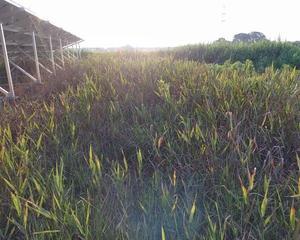 梅雨明け後の雑草状況は。。。