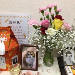 1/48 ビランビー (第7回) & 月替わりのお花