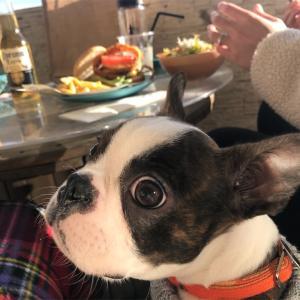 憧れの【犬を連れての海cafe】