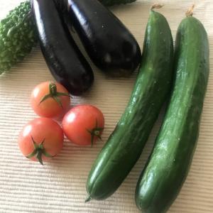 豊作!豊作!家庭菜園で収穫した野菜に本当に感謝です