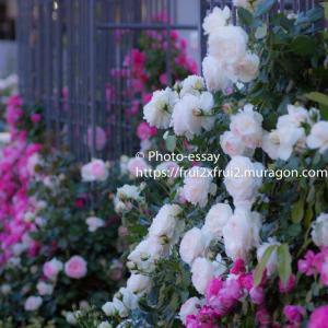 花の写真で癒やしを添えて