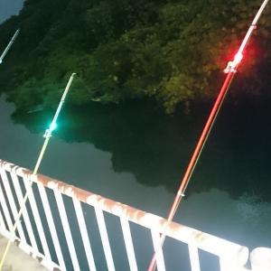 2019うなぎ釣り 20