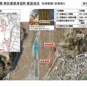 原木情報:富士川で樹木伐採の公募が開始されました