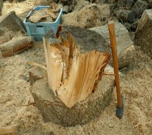 縦に半分に切った大玉は、繊維の流れを見ながら薪にする
