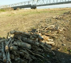 原木情報16:富士川河川敷、原木配布終了