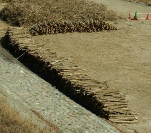 原木情報:富士川河川敷2(各エリアの配布計画発表)