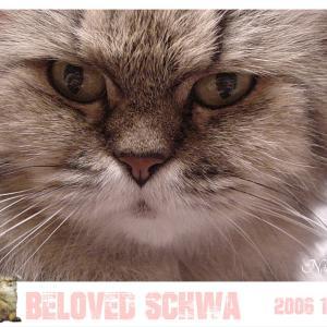 シュワちゃんの命日 10年が過ぎても愛しさは変わらない