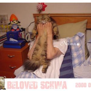 #全日本猫伸ばし協会 パパに抱っこされる可愛すぎるシュワちゃん