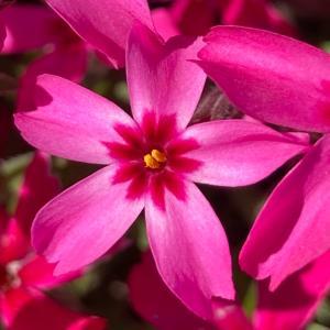 今日のお花と神戸ショコラ