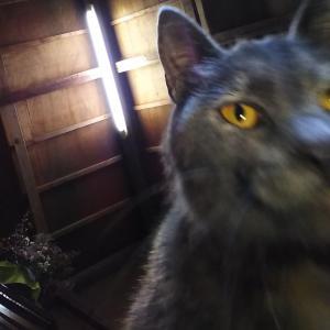 猫を下から撮ると自撮りみたいに撮れる