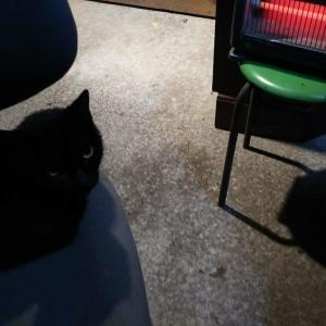ヒーターで温まる猫