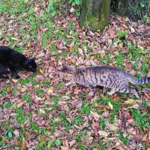 コミュ力のない猫と三色毛玉