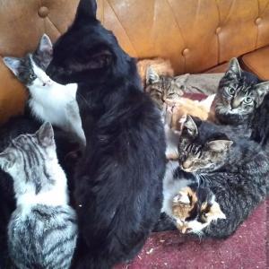 大猫団子大家族