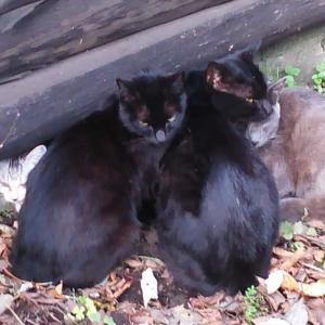 猫団子を形成する猫達
