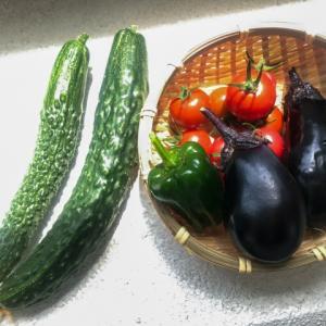 夏に食べたい食材~夏野菜編~