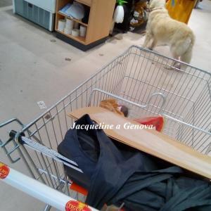 スーパー内で、ワンコも一緒にお買い物??