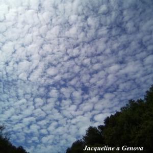 秋の青空一面にうろこ雲☆
