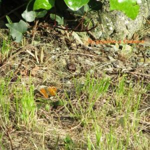 オレンジ色の蝶の予言☆/「Lonley Butterfly」REBECCA