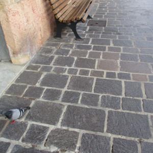 鳩とベンチ。
