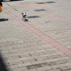 今日のワンコ! - 買い物のお供 - (2020.6月) / 友人と散歩するネコ☆/ そして、週末…