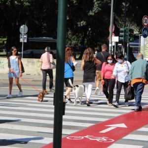 今日のワンコ!- ウィズコロナ時代の街中にてno.2/横断歩道にも+自転車レーン- (2020.9月)