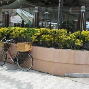 プロムナードに置き去りの自転車。