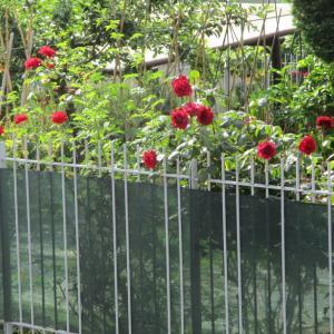 赤いバラ♡/カニクリームコロッケのお嬢さん☆