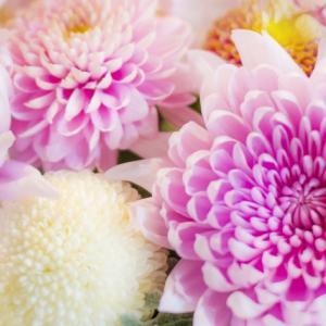 日本の文化~五節句~9月9日 重陽(ちょうよう)菊の節句 菊酒 被綿 後の雛